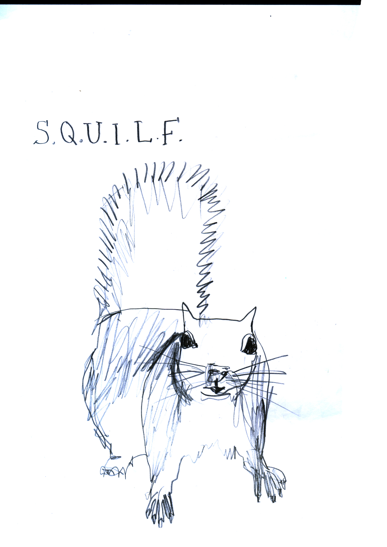 squilf